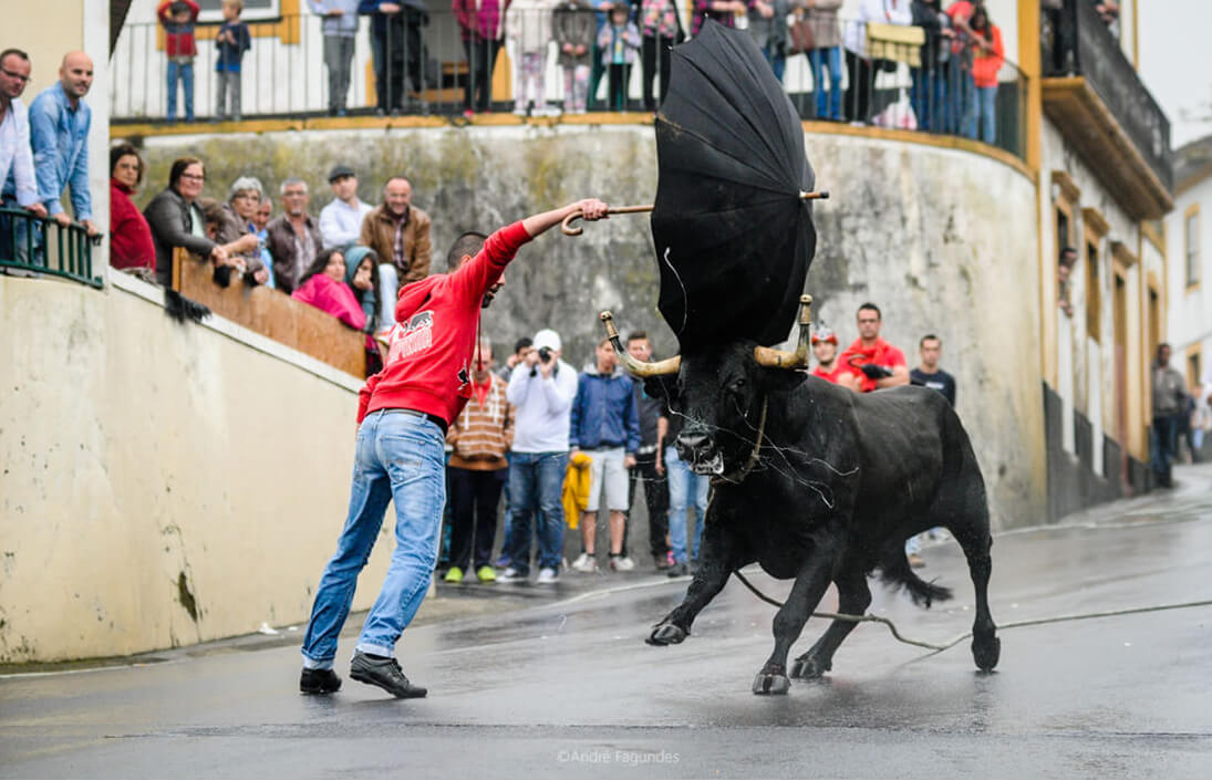 Bullfight Tour
